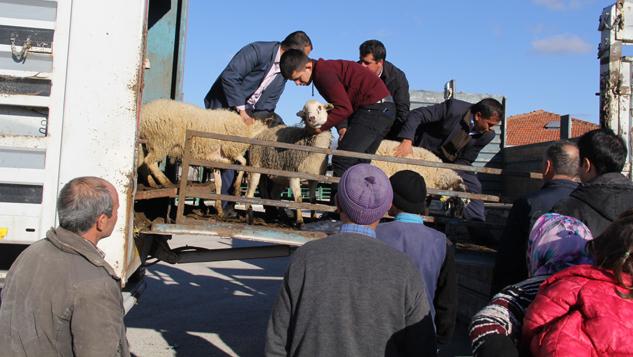 Genç Çiftçilere Küçükbaş Hayvan Dağıtımı Yapıldı
