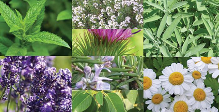 Tıbbi ve Aromatik Bitki yetiştirmek isteyenlere cüzi kiralı araziler